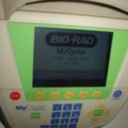 BioRad MyCycler.1